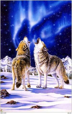 Dessins de loups